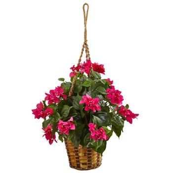 Bougainvillea in Hanging Basket - SKU #6988