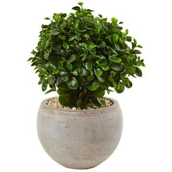 2 Eucalyptus in Sand Colored Bowl UV Resistant Indoor/Outdoor - SKU #6993
