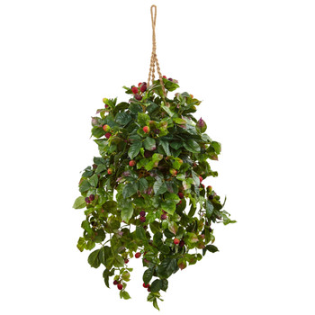 Raspberry Plant Hanging Basket - SKU #6996