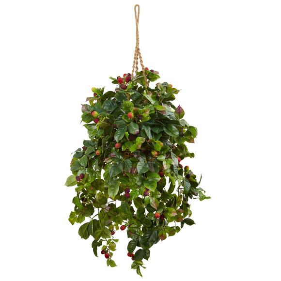 Raspberry Plant Hanging Basket - SKU #6996