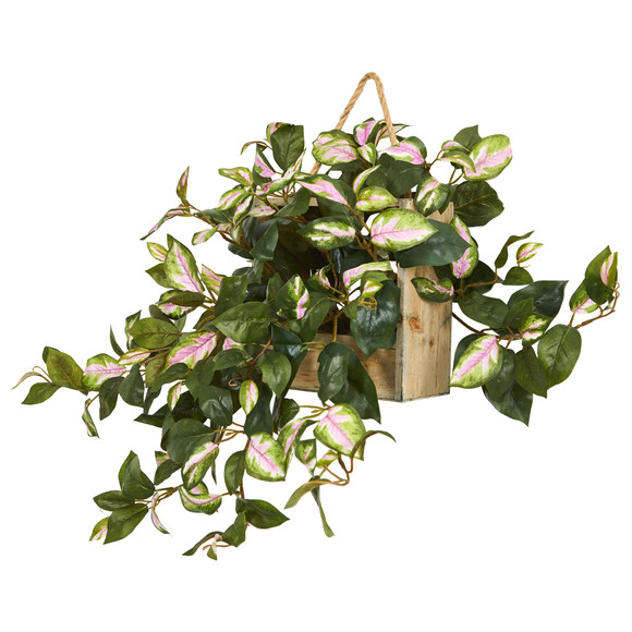 24 Hoya Artificial Plant in Decorative Hanging Frame - SKU #8373 - 1