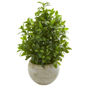 30 Coffee Leaf Artificial Plant in Sandstone Bowl Real Touch - SKU #8578
