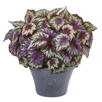 22 Begonia Artificial Plant in Gray Planter - SKU #8793