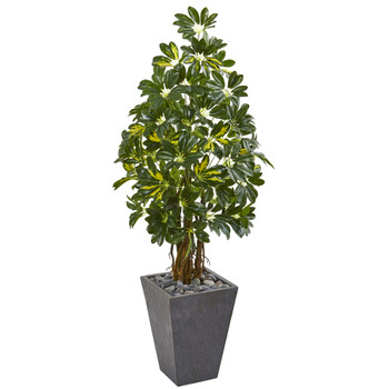 57 Schefflera Artificial Tree in Slate Planter - SKU #9329