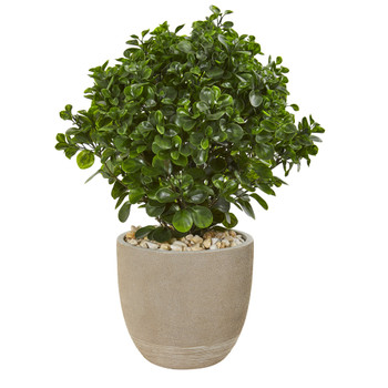 30 Peperomia Artificial Plant in Sand Stone Planter UV Resistant Indoor/Outdoor - SKU #9469