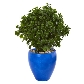 32 Peperomia Artificial Plant in Blue Planter UV Resistant Indoor/Outdoor - SKU #9470