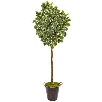 77 Variegated Aralia Artificial Tree in Metal Planter - SKU #9563