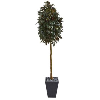 71 Capensia Ficus Artificial Tree in Slate Planter - SKU #9615