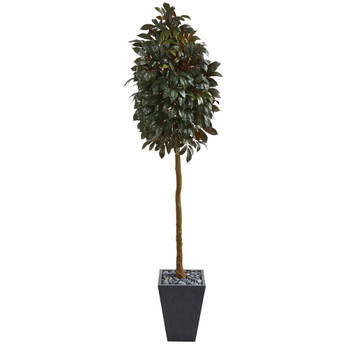 71 Capensia Ficus Artificial Tree in Slate Planter - SKU #9615