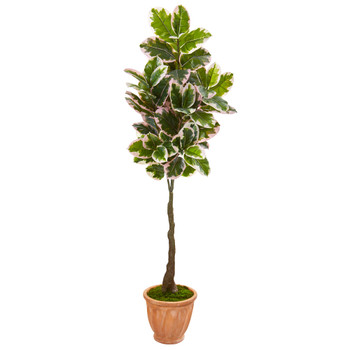 67 Variegated Rubber Leaf Artificial Tree in Terra-Cotta Planter Real Touch - SKU #9671