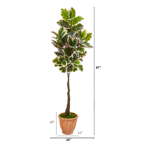 67 Variegated Rubber Leaf Artificial Tree in Terra-Cotta Planter Real Touch - SKU #9671 - 1