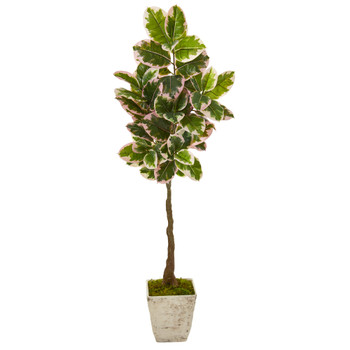 69 Variegated Rubber Leaf Artificial Tree in Country White Planter Real Touch - SKU #9672