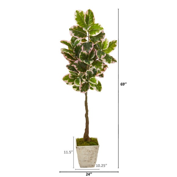 69 Variegated Rubber Leaf Artificial Tree in Country White Planter Real Touch - SKU #9672 - 1