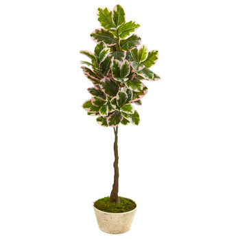 67 Variegated Rubber Leaf Artificial Tree in Planter Real Touch - SKU #9676