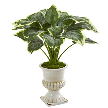 24 Variegated Hosta Artificial Plant in White Urn - SKU #P1234