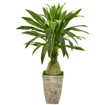62 Dracaena Artificial Plant in Country White Planter - SKU #P1249