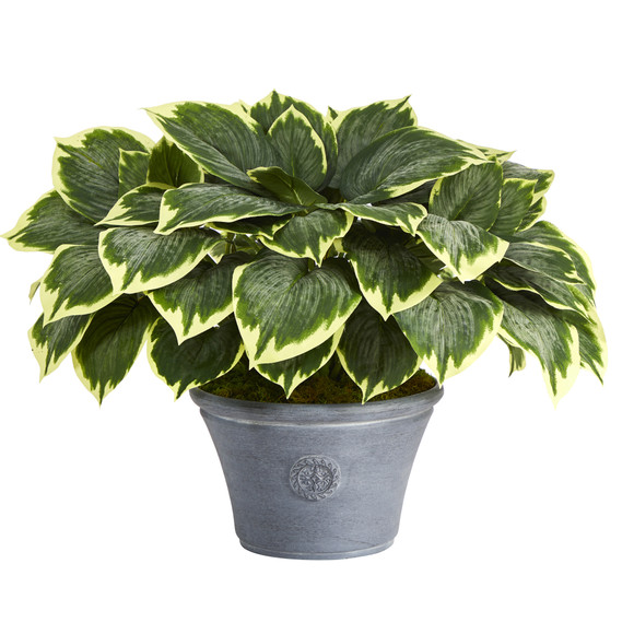 23 Variegated Hosta Artificial Plant in Gray Planter - SKU #P1359