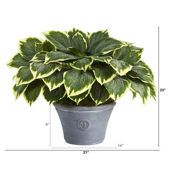 23 Variegated Hosta Artificial Plant in Gray Planter - SKU #P1359 - 1