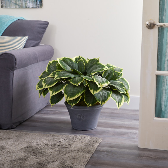 23 Variegated Hosta Artificial Plant in Gray Planter - SKU #P1359 - 2