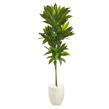 62 Dracaena Artificial Plant in White Planter Real Touch - SKU #P1411