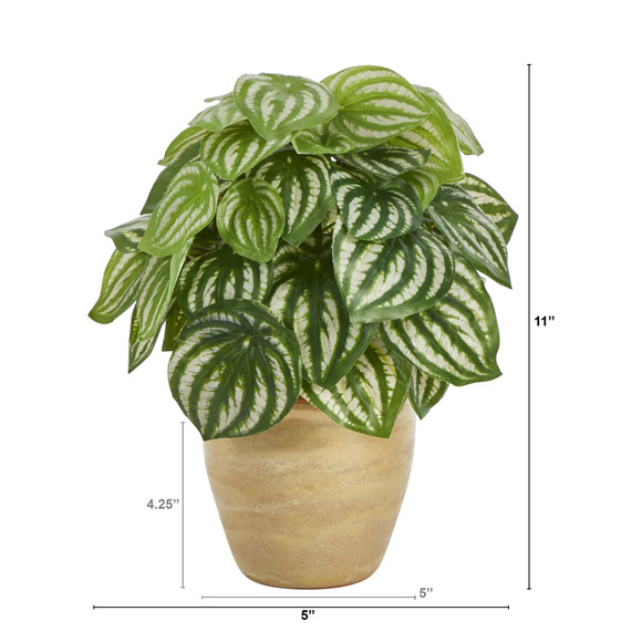 11 Watermelon Peperomia Artificial Plant in Ceramic Planter Real Touch - SKU #P1446 - 1