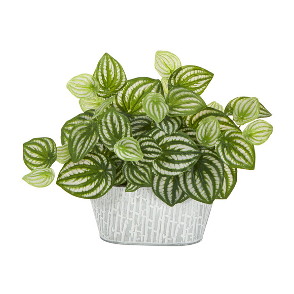 15 Watermelon Peperomia Artificial Plant in White Tin Planter Real Touch - SKU #P1478