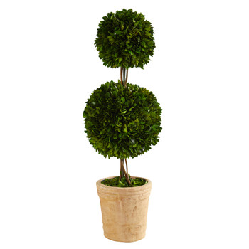 2.5 Preserved Boxwood Double Ball Topiary Tree in Decorative Planter - SKU #T1001