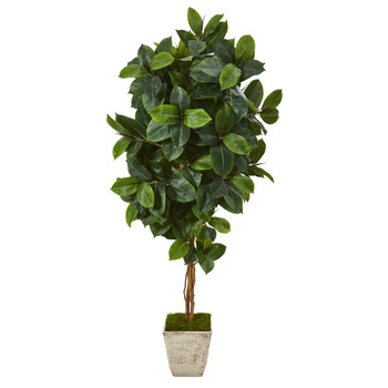 6 Rubber Leaf Artificial Tree in Country White Planter - SKU #T1091
