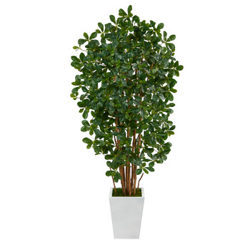 5.5 Black Olive Artificial Tree with 1365 Bendable Leaves in Metal White Planter - SKU #T2214