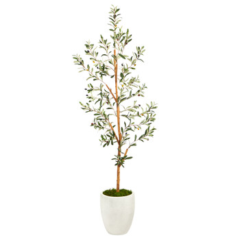 5.5 Olive Artificial Tree in White Planter - SKU #T2443