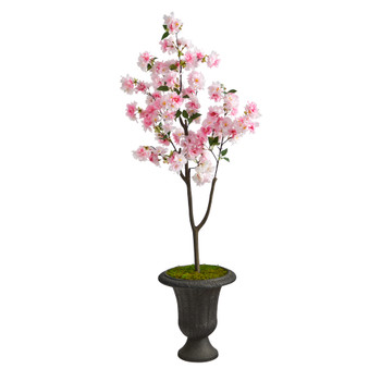 5 Cherry Blossom Tree in Charcoal Urn - SKU #T2530