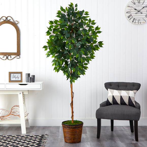 6.5 Ficus Artificial tree in Wicker Planter - SKU #T2581 - 2