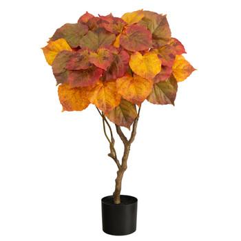 3 Autumn Umbrella Ficus Tree - SKU #T2789