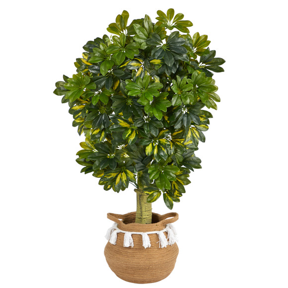4 Schefflera Tree in Boho Chic Handmade Natural Cotton Woven Planter with Tassels Real Touch - SKU #T2933