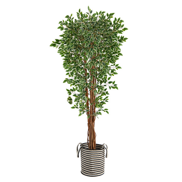 70 Variegated Ficus Tree in Handmade Black and White Natural Jute and Cotton Planter UV Resistant - SKU #T2974